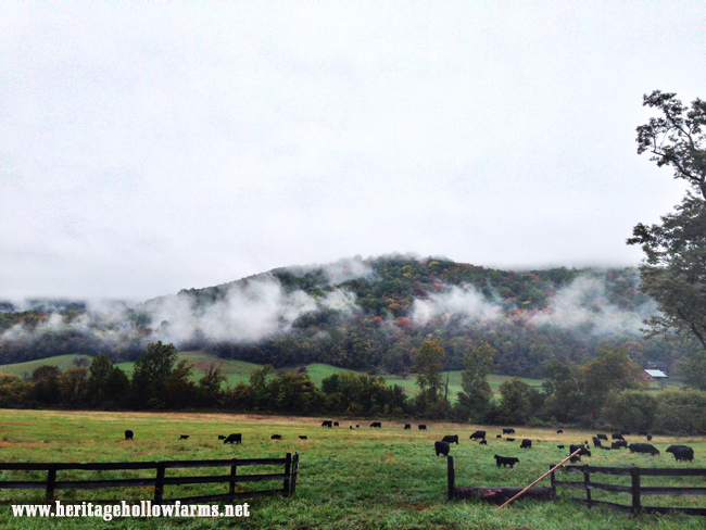 search #heritagehollowfarms on Instagram for more behind-the-scenes farm life images