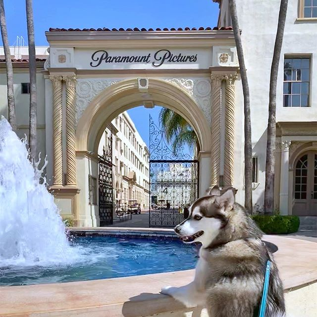 Take your derp to work day 🎬🐺✨ #paramountpictures #paramountpups #friday