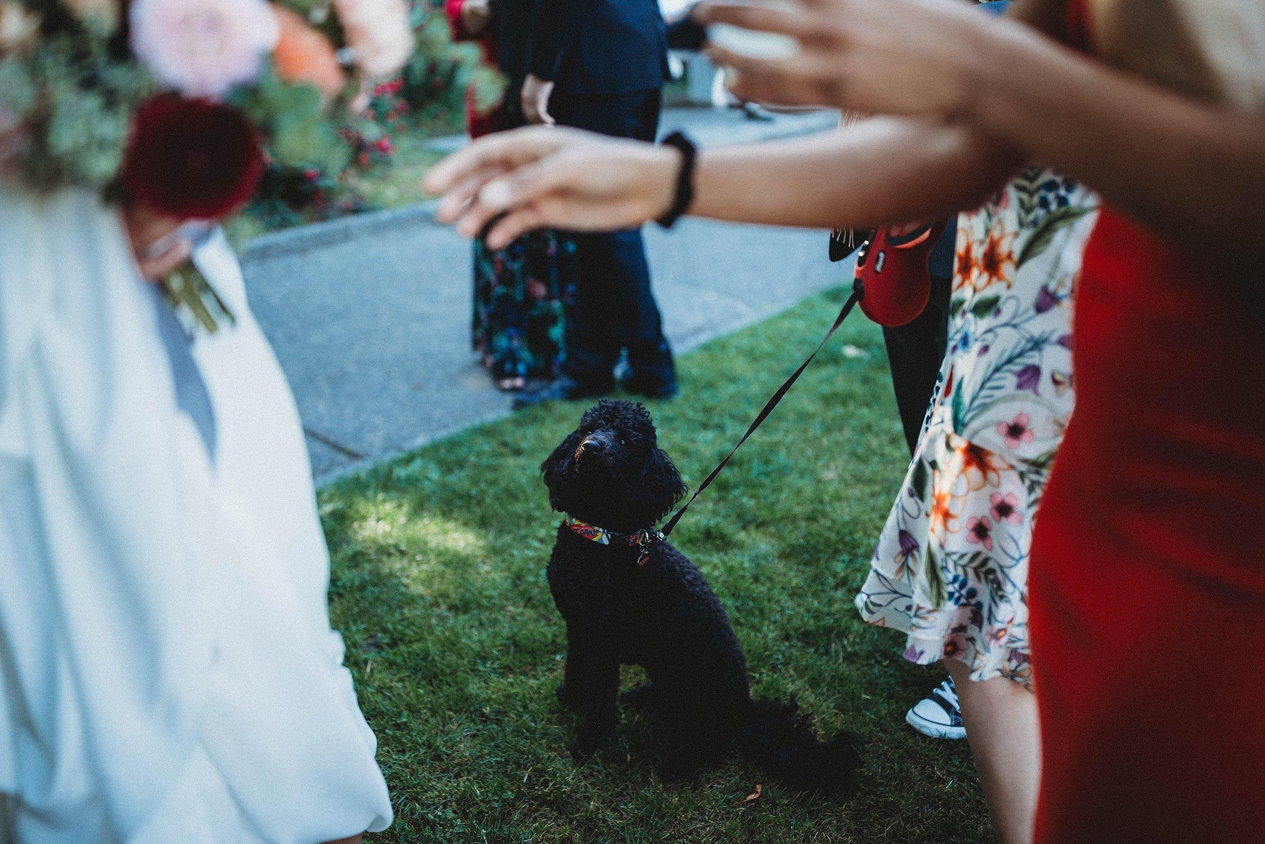 yinshi david - seattle wedding photographer - SAM wedding volunteer park reception -28.jpg