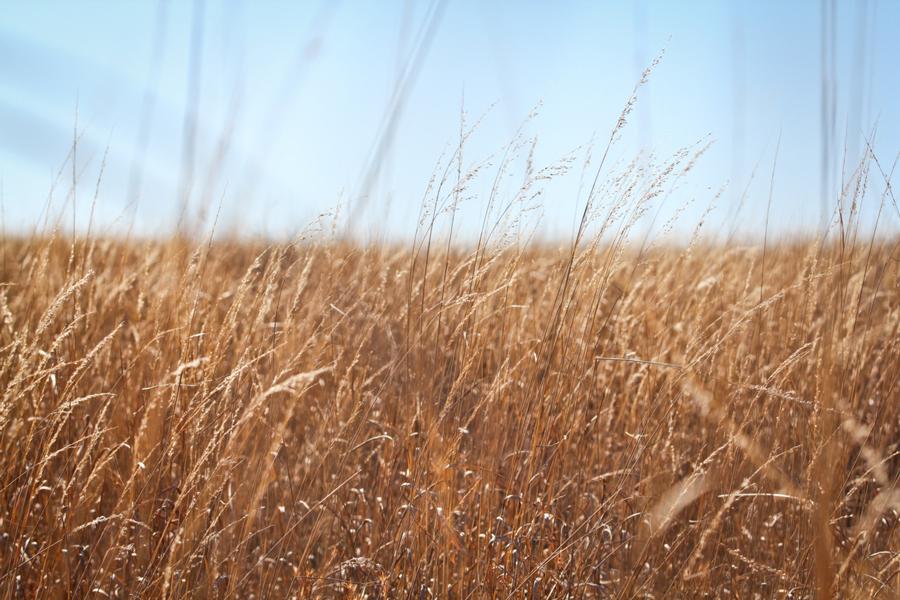 Dreamy field