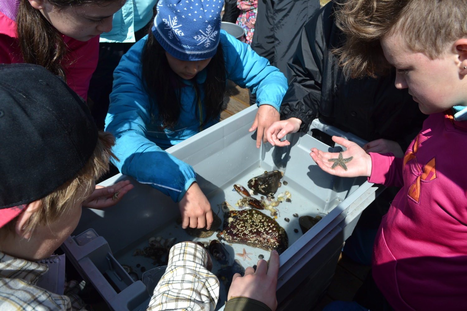 Students gather around fish totes to examine their invertebrate collections from the days low tide