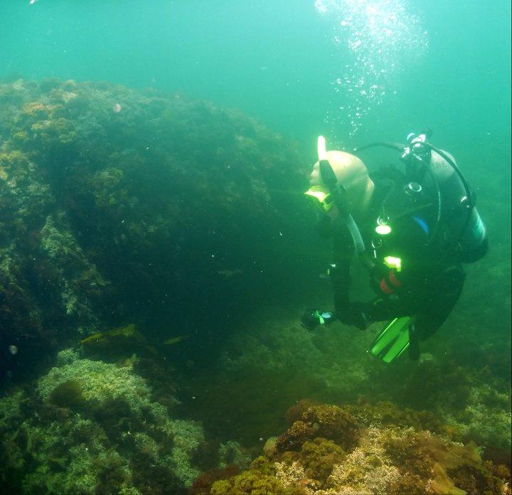 Marissa diving off of Monhegan Island, ME.