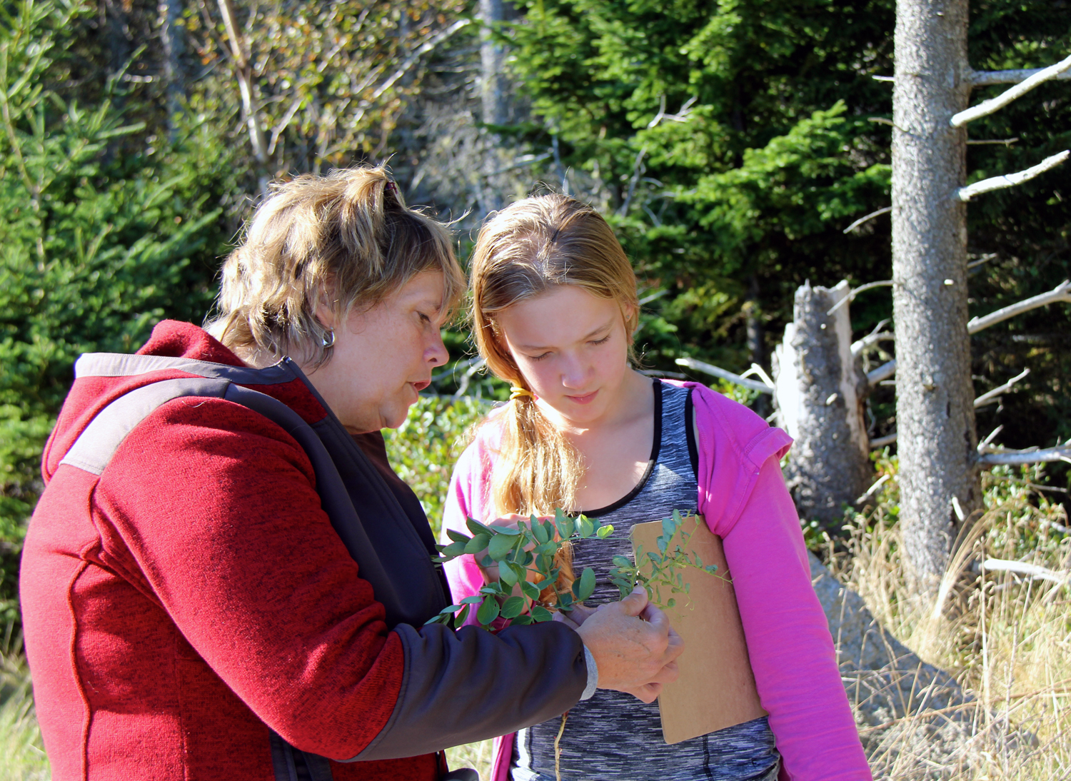 A North Haven student learns about the wild beach pea