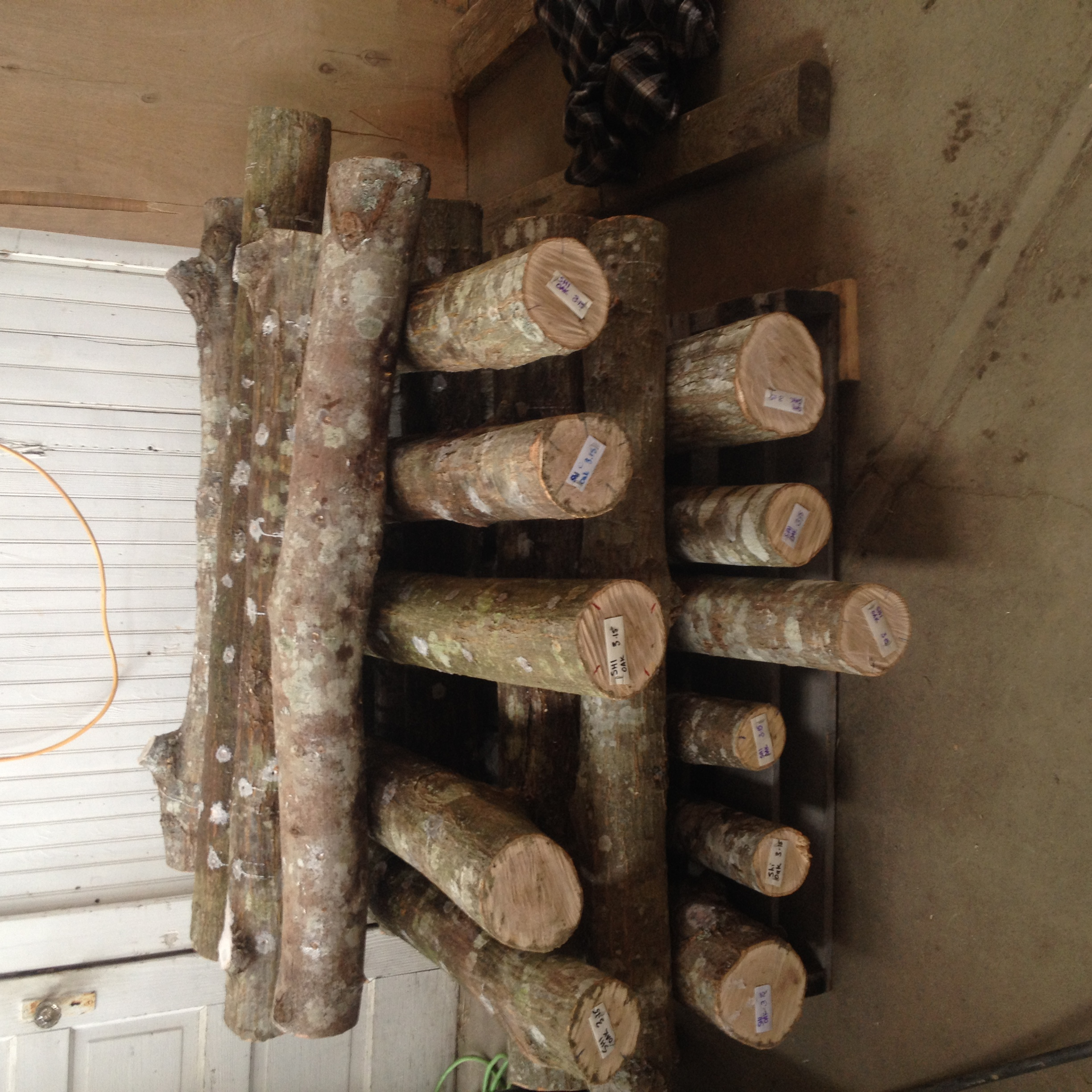 Crib-stacked finished logs (the light patches are where the drill holes have been sealed with paraffin wax) The ends have been labeled with the type of mushroom, type of log, and date