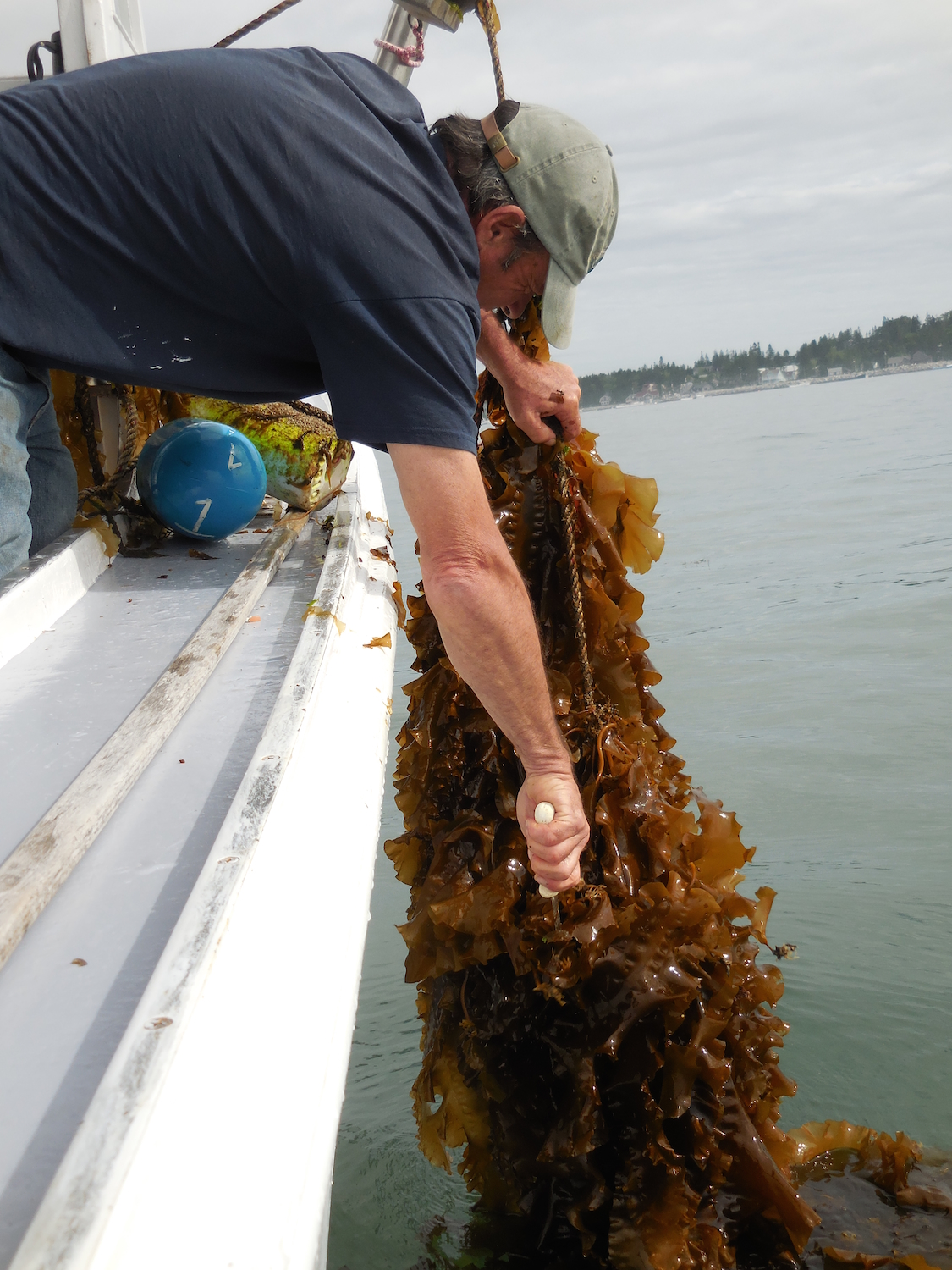 Some of the bags were completely covered in fast growing seaweed!