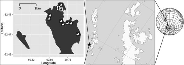 Cape Shirreff, Livingston Island, Antarctica: the black star marks the location of Cape Shirreff on Livingston Island.