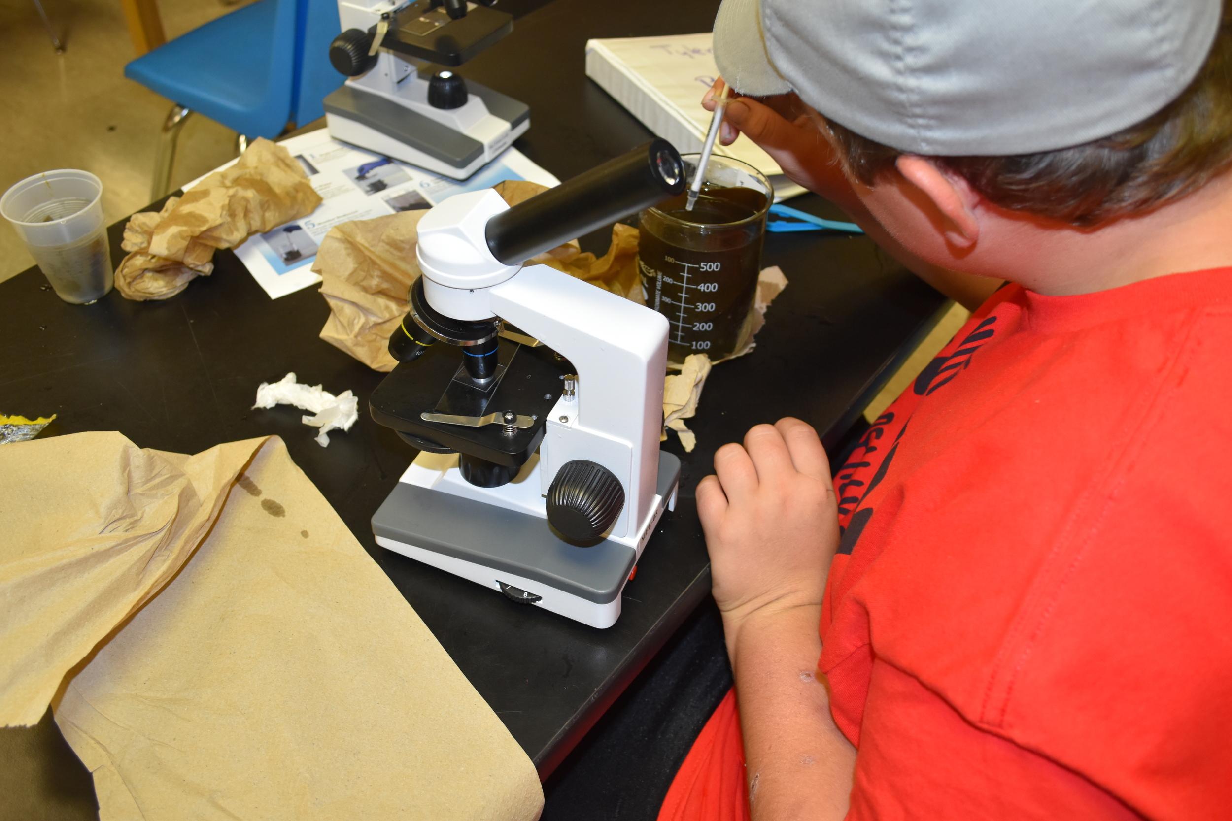 Students harvesting kelp spores