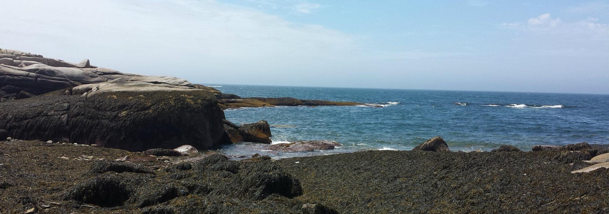 Exploring the intertidal near Two Bush Island!