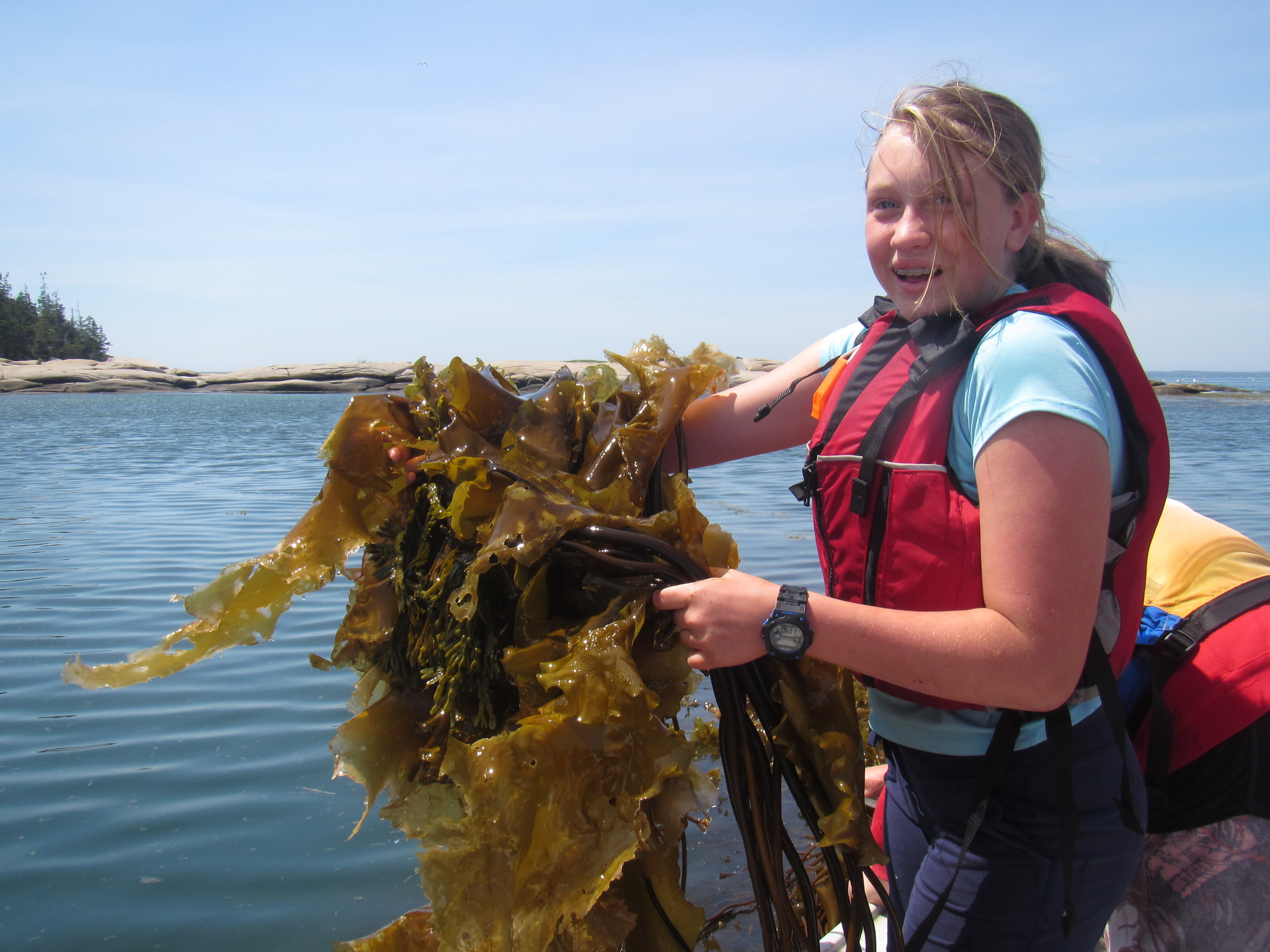 MS Marine Ecology student getting into the kelp harvest on Hurricane Island
