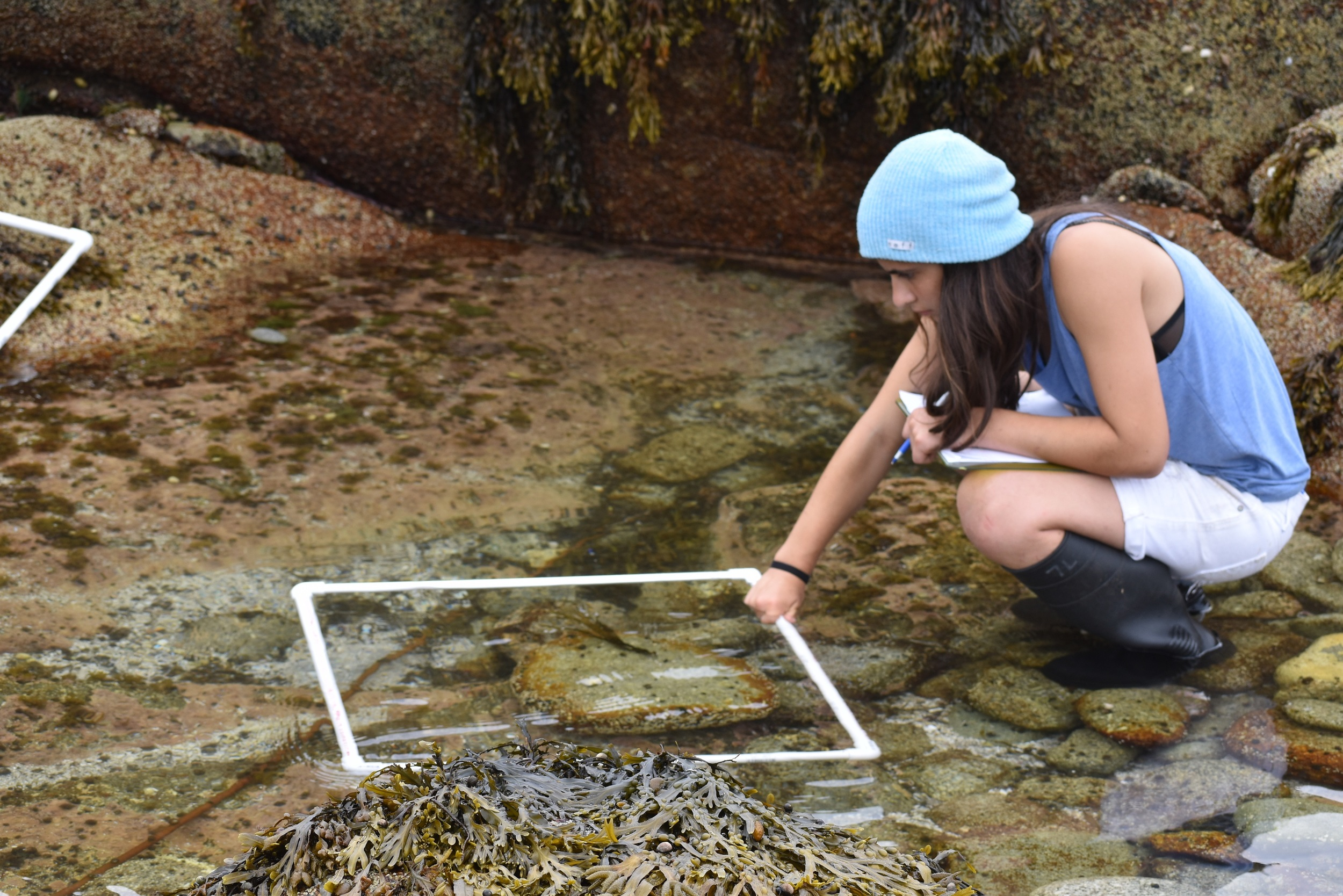 Intertidal data collection with quadrats