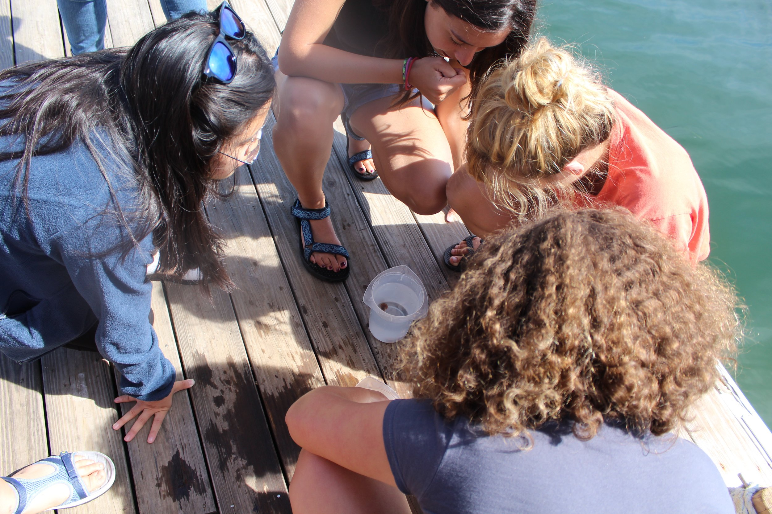 Looking at baby scallops on the dock