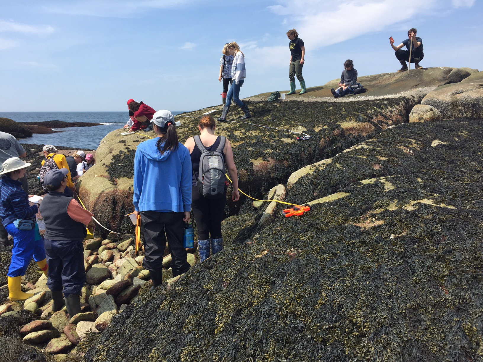 CSW students practice using transect tapes and quadrats in the intertidal zone. Photo courtesy of Scott Byrd.