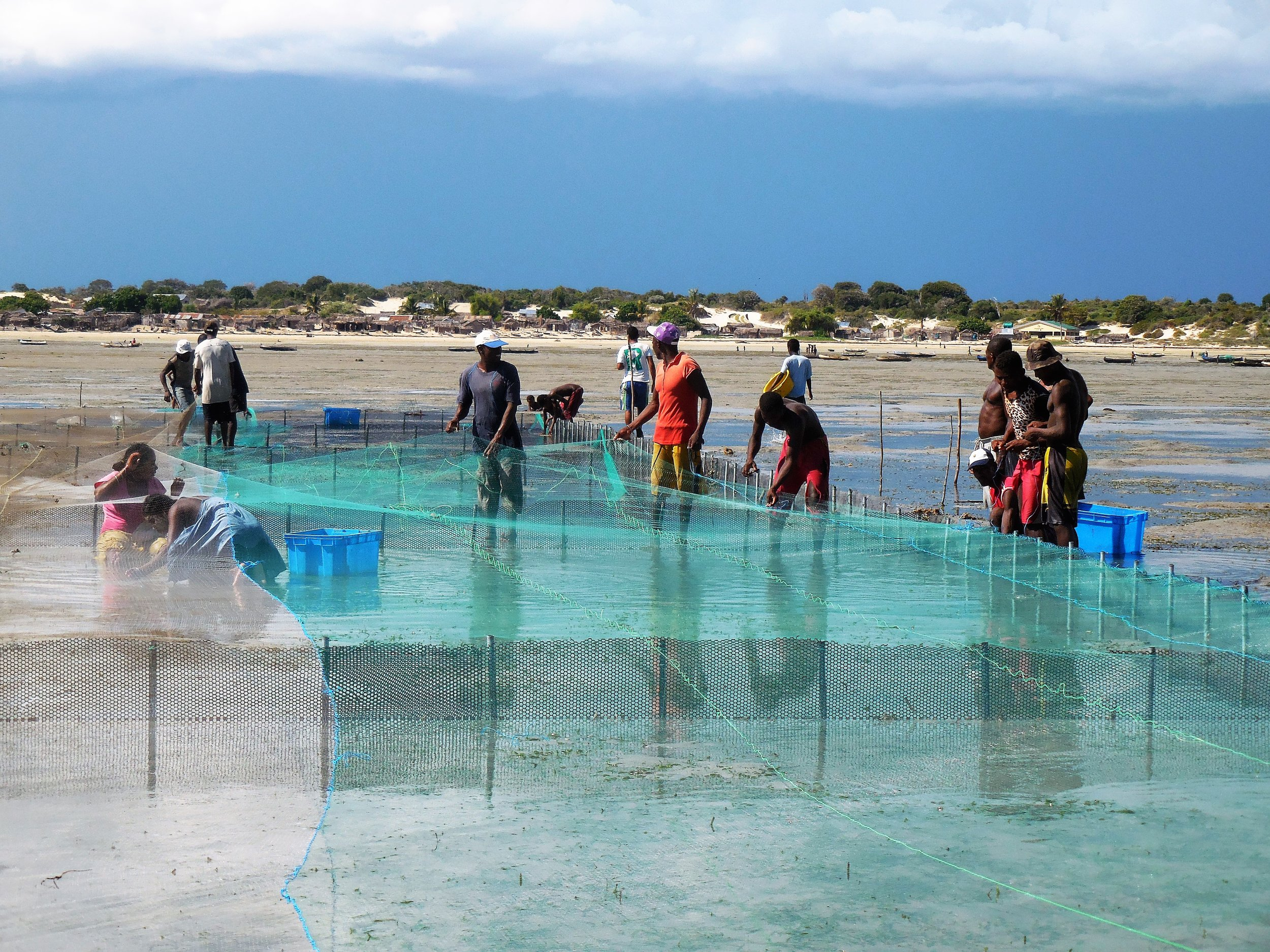 Building new sea cucumber pens in the tidal flats