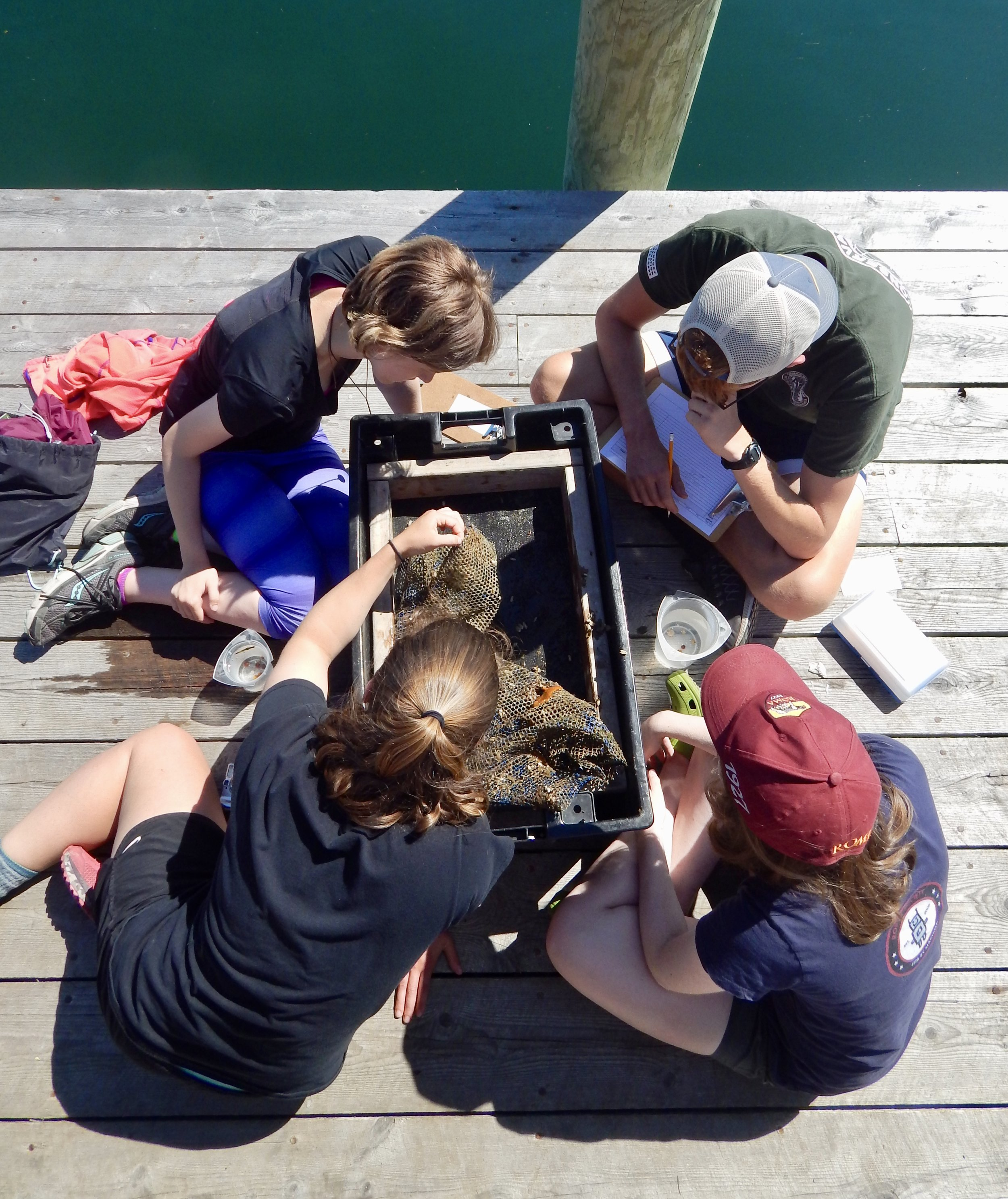 - Sorting spat bags on the pier...looking for baby scallops!