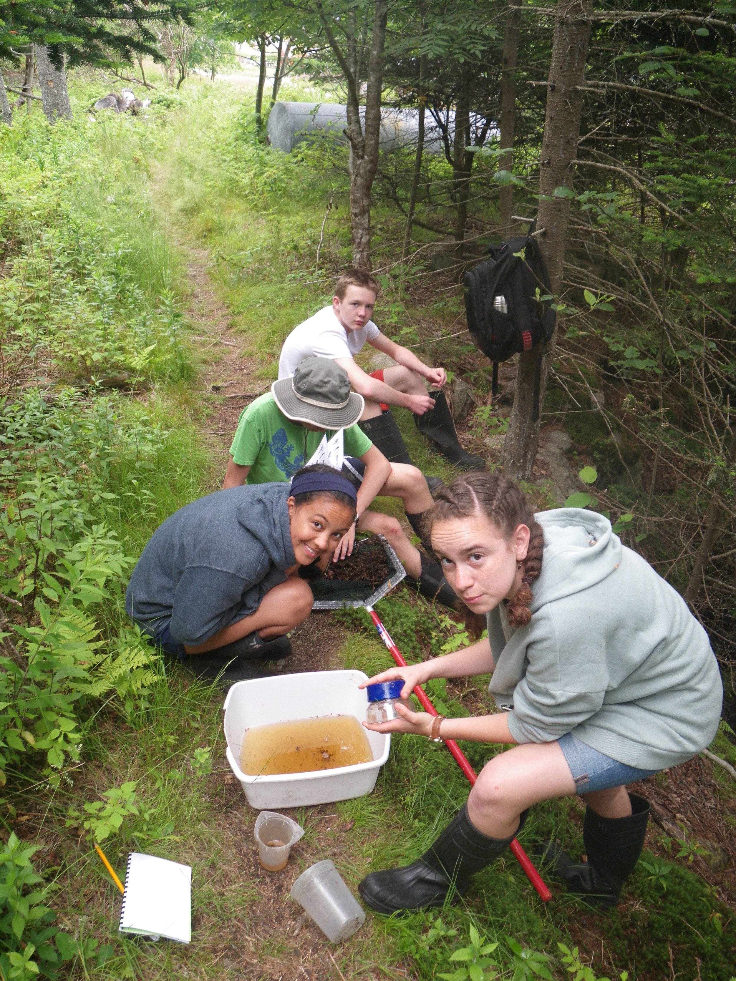 Students sort and identify their net contents using field guides and macro-lenses so they could gather count data for various freshwater macroinvertebrate families.
