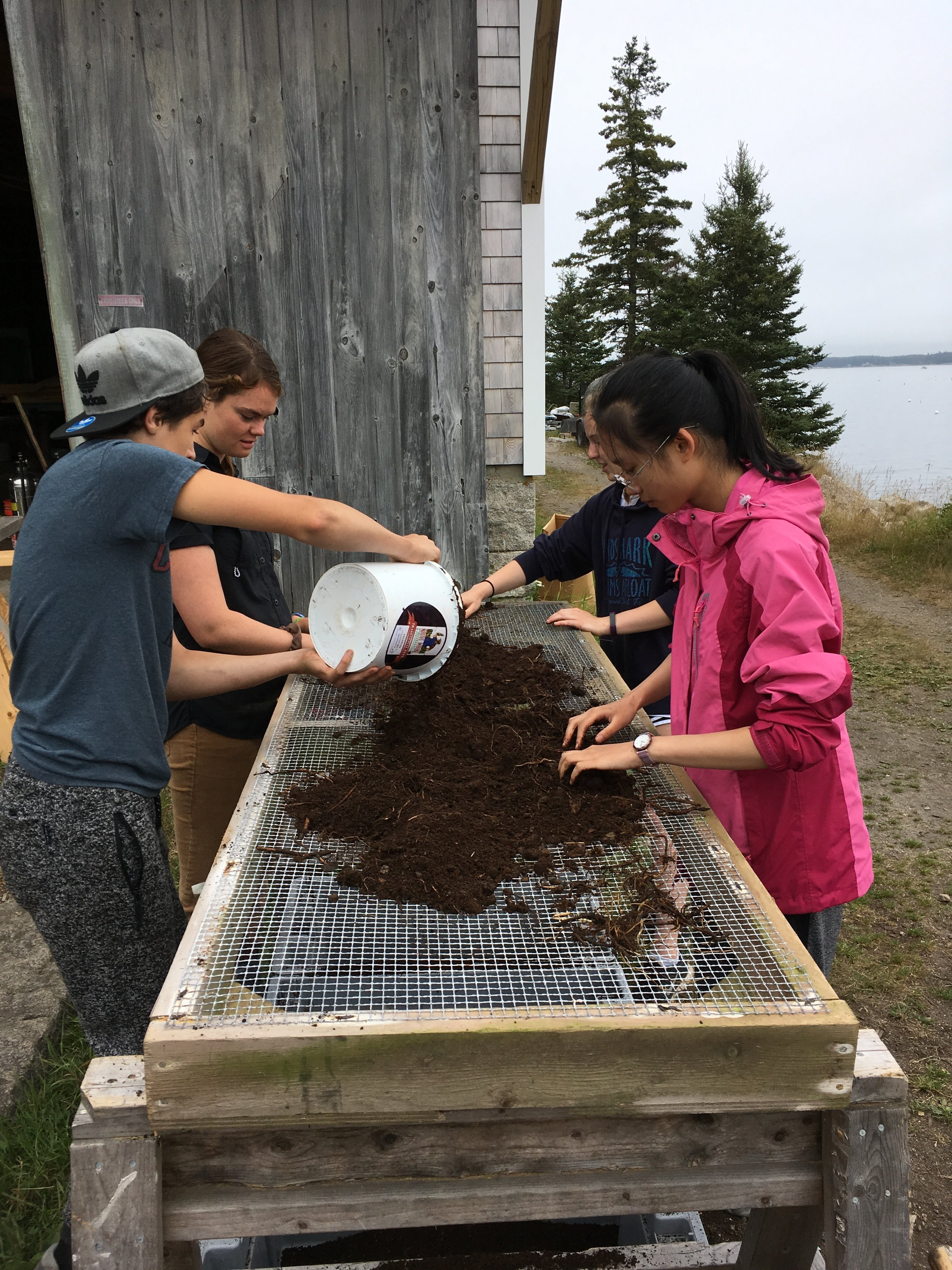 Students sift soil to use as starting material for their worm bins