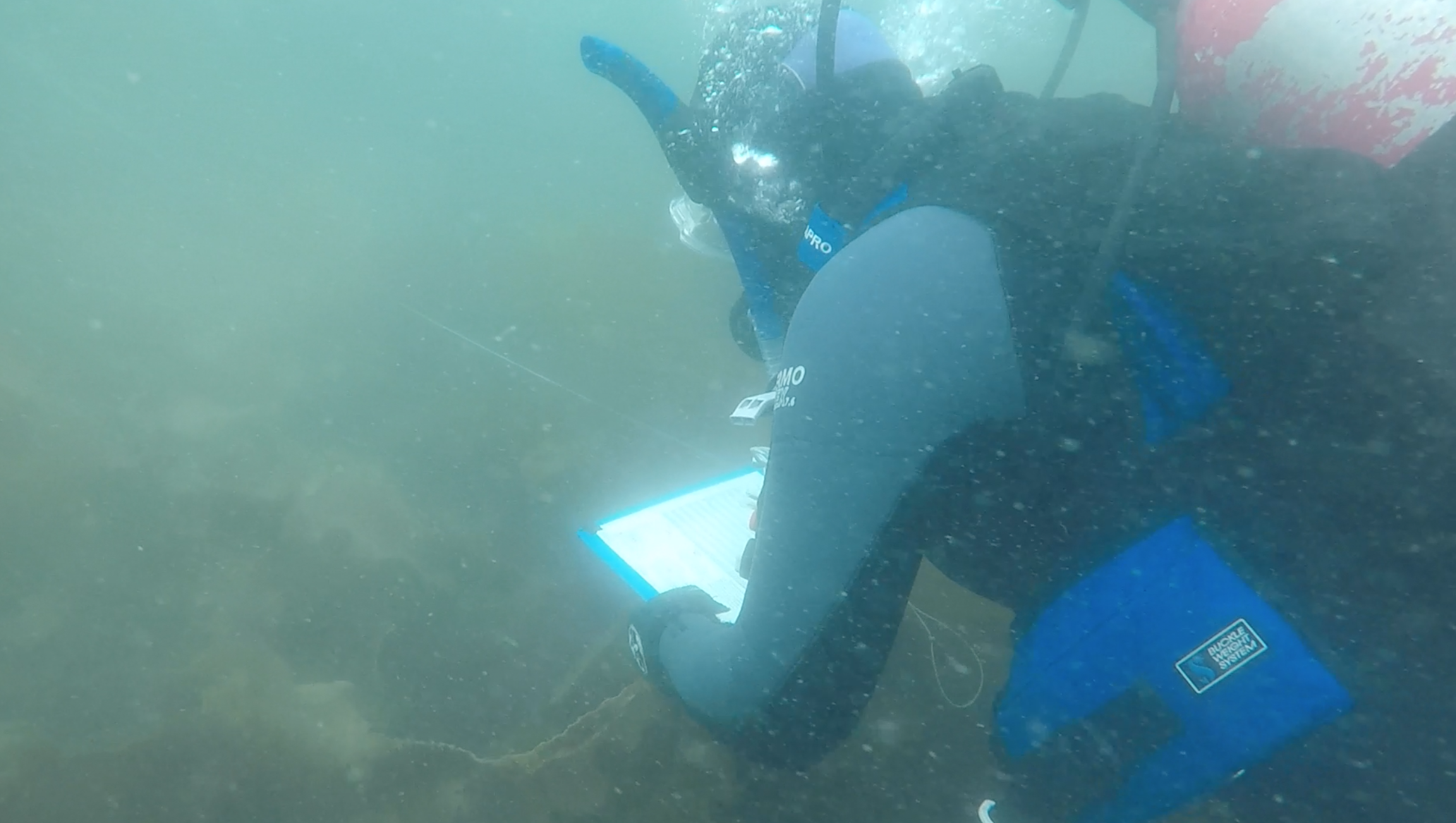 Bailey recording fish counts on waterproof paper taped to a clipboard.
