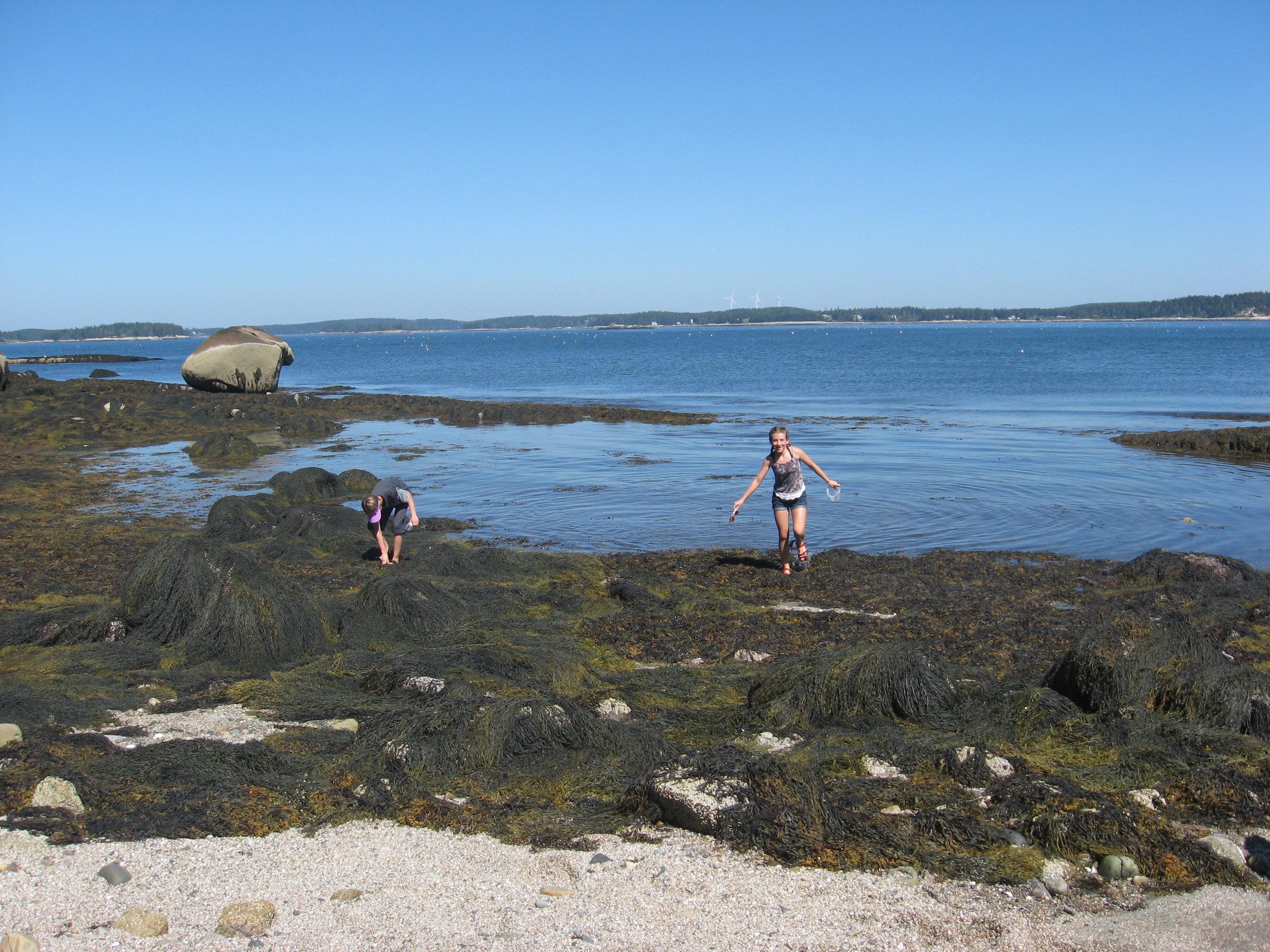 - Waldorf School of Lexington students explore Hurricane's intertidal zone.