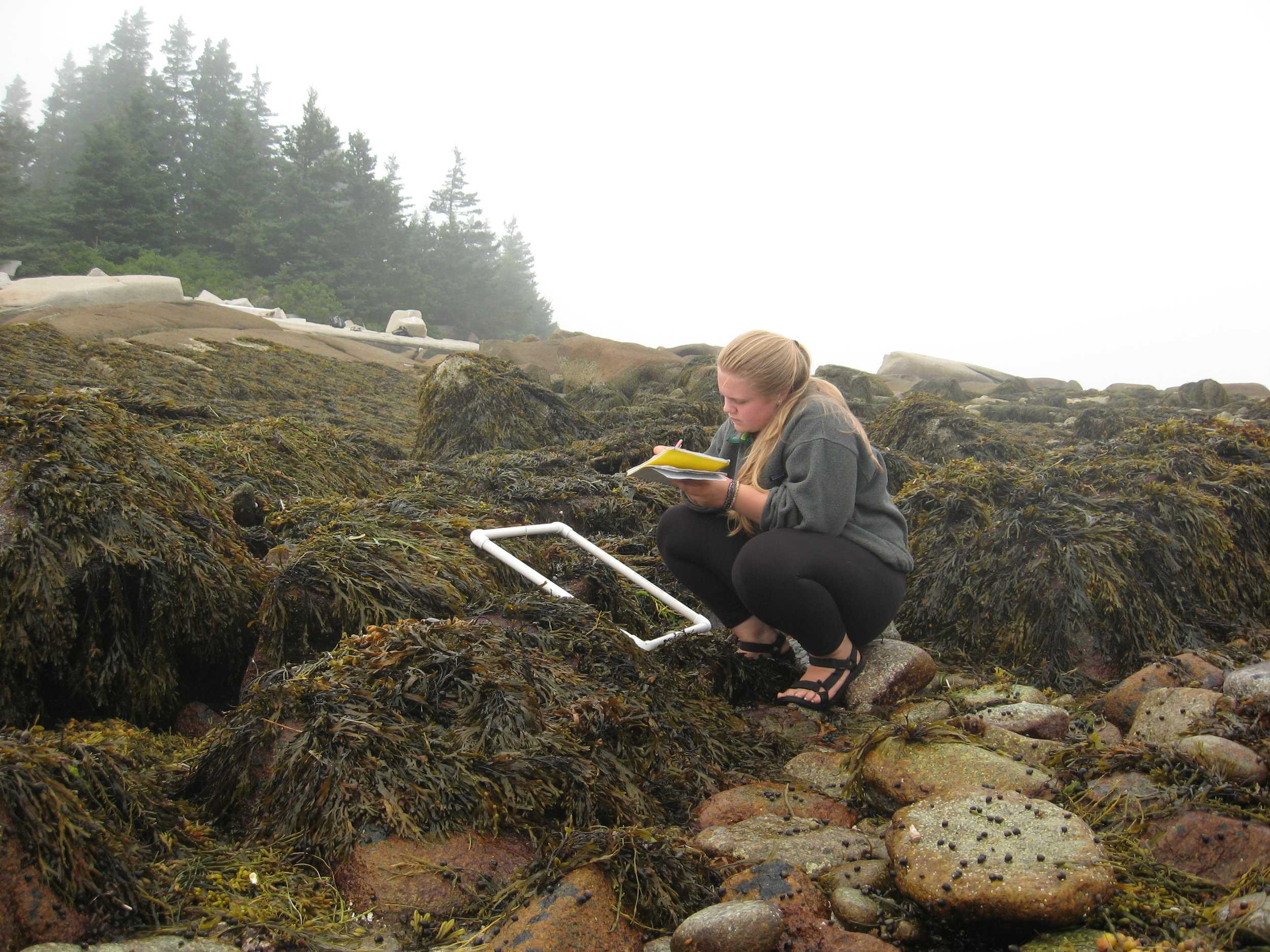 WOTS Intertidal quadrat 2.JPG