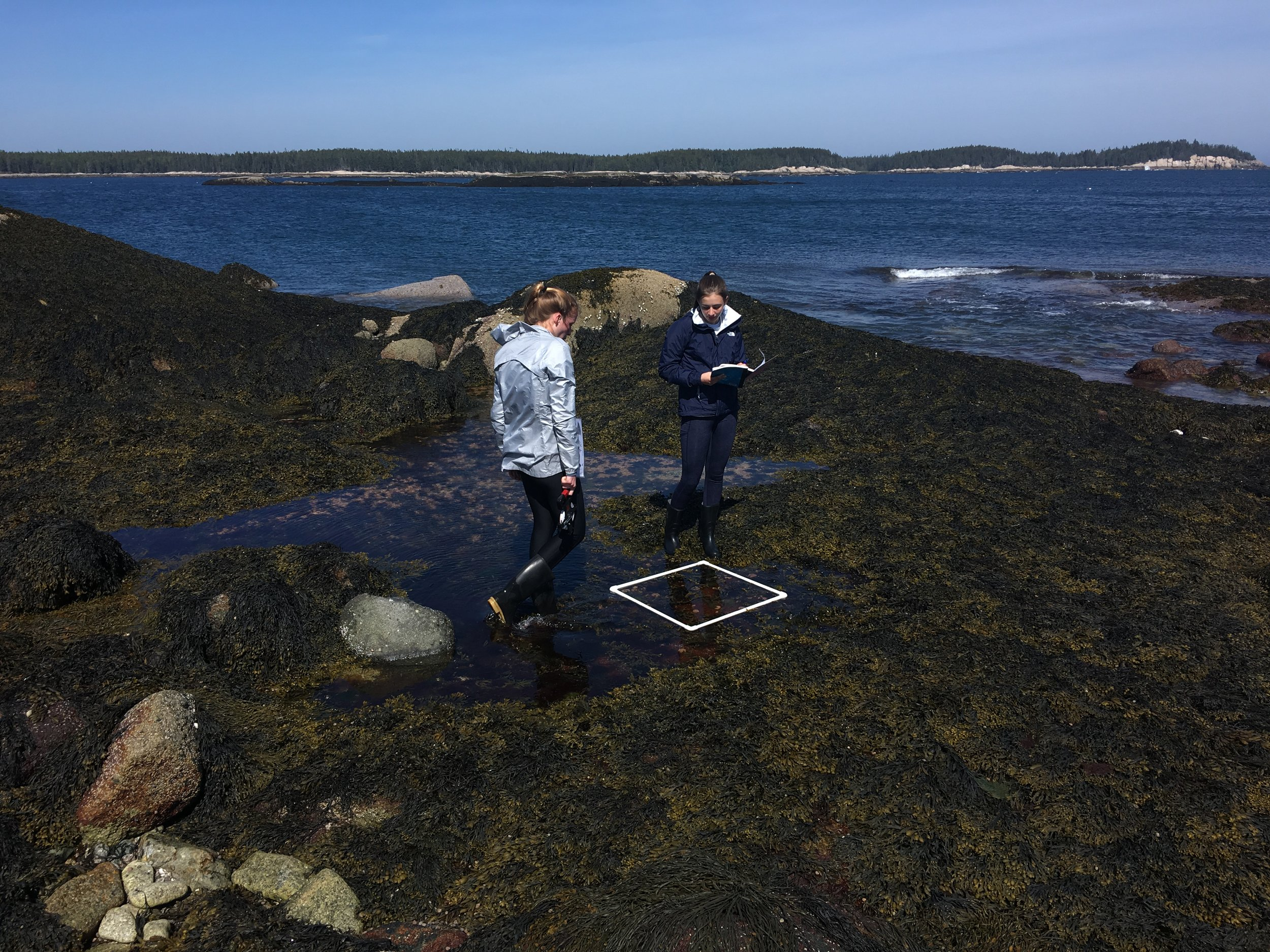 Abington students collecting data in the intertidal