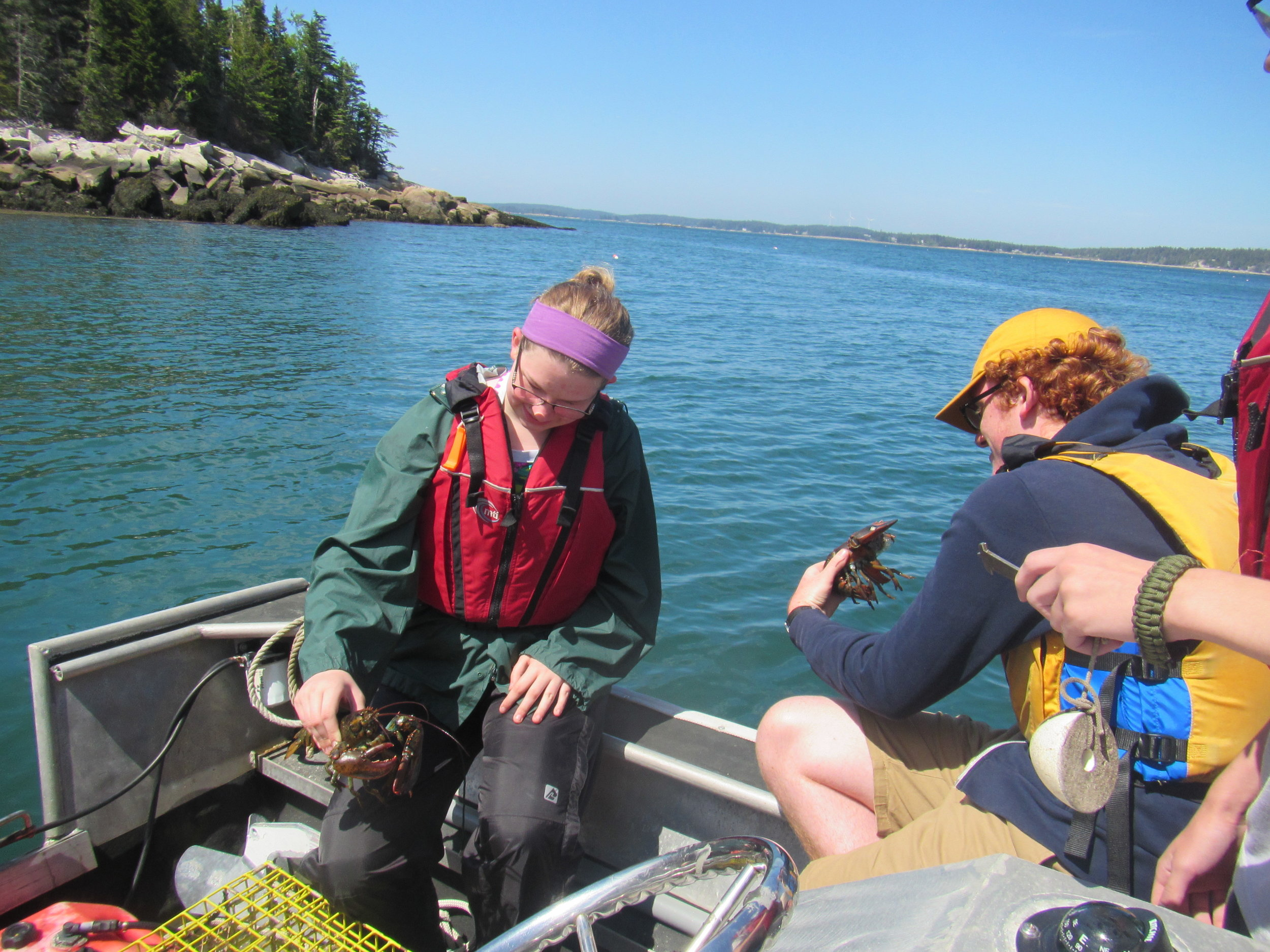 Students examine these lobsters and determine they are too small to keep.