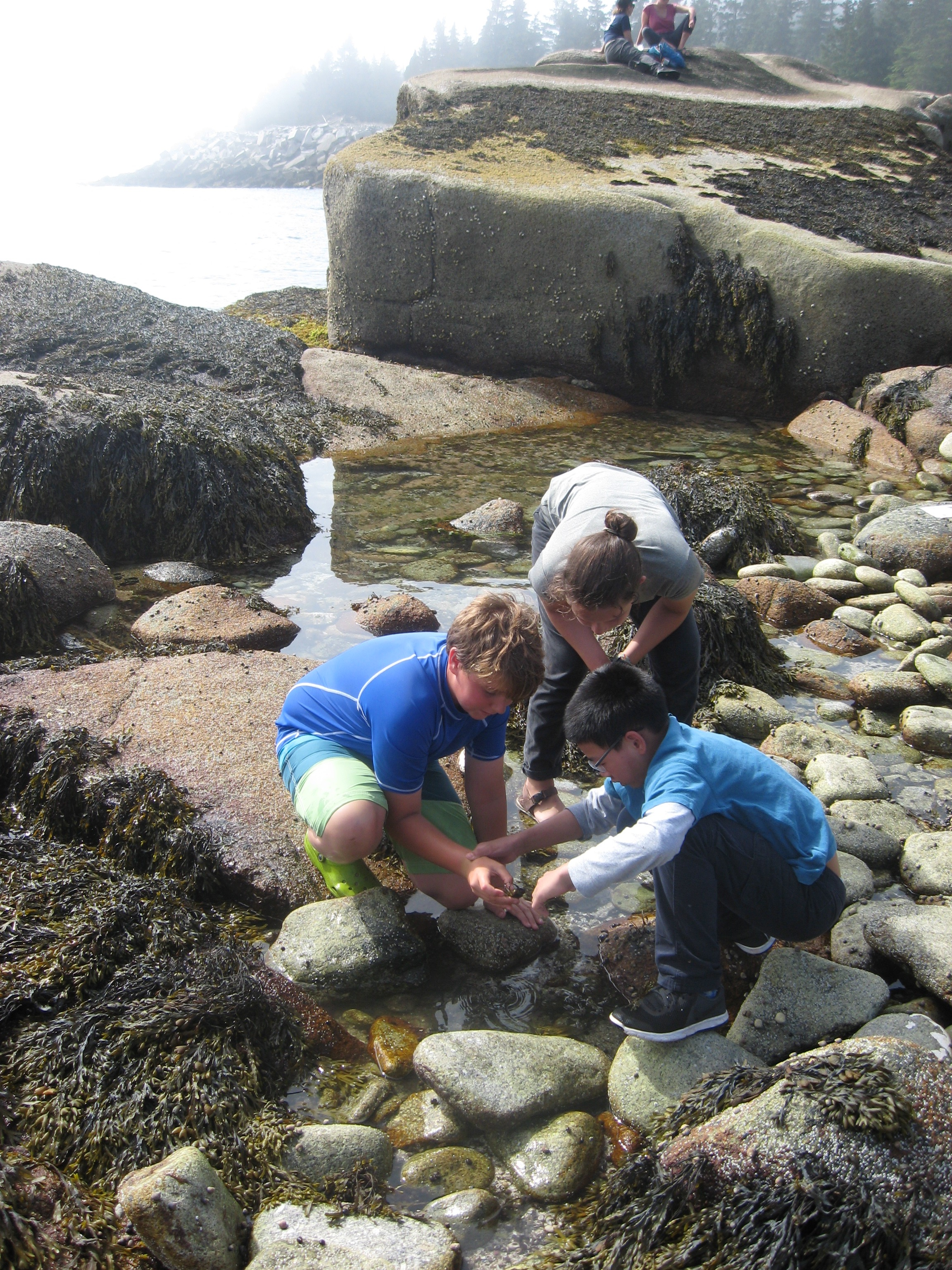 Finding something special in the intertidal zone.