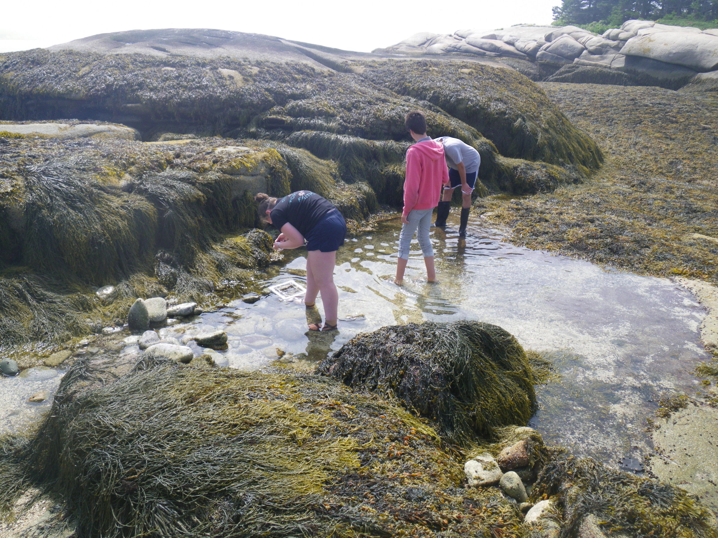 Students doing intertidal zone research.