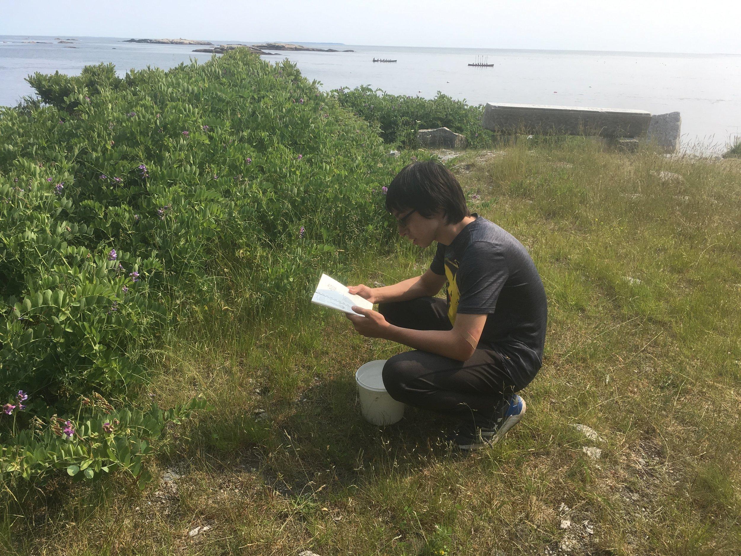 A positive field guide identification: beach peas - yum!