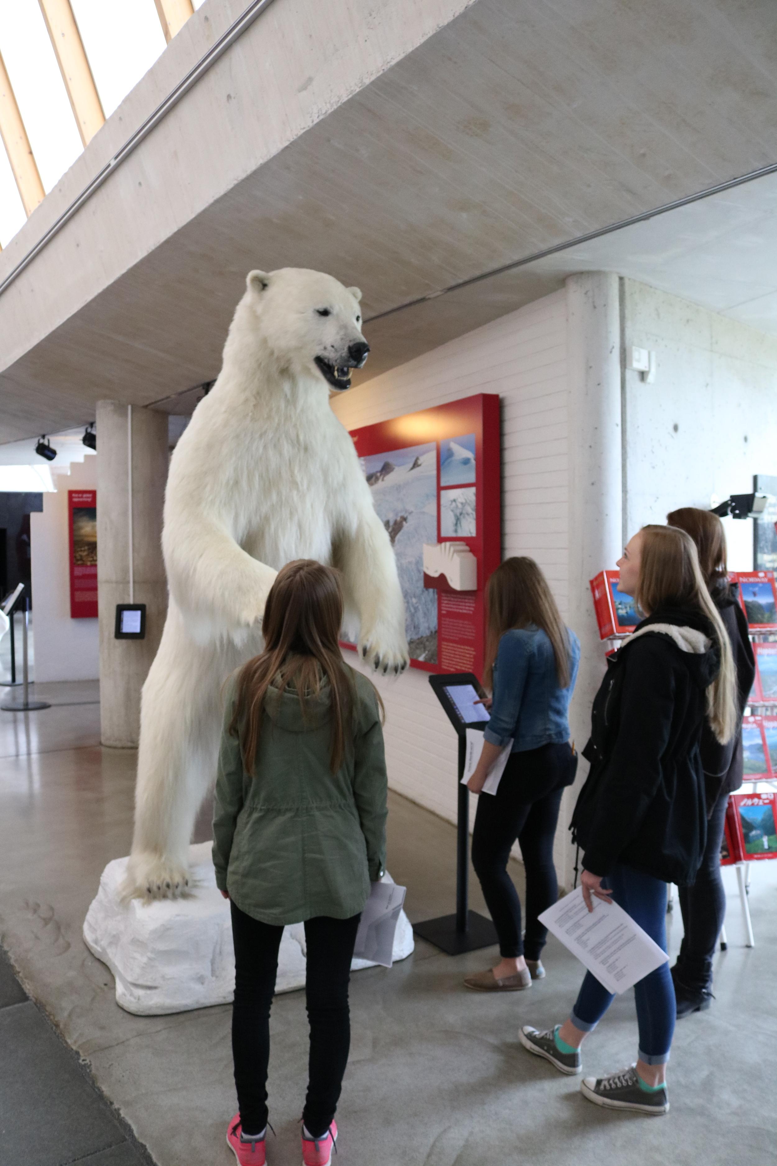 Isbjørnen vår