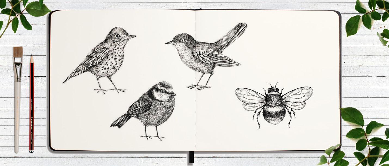 BIRD-BEE-sketchbook-SAMARA HARDY.jpg