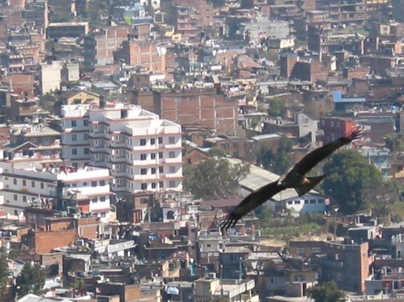 Bird of Prey over Kathmandu (Nepal).JPG