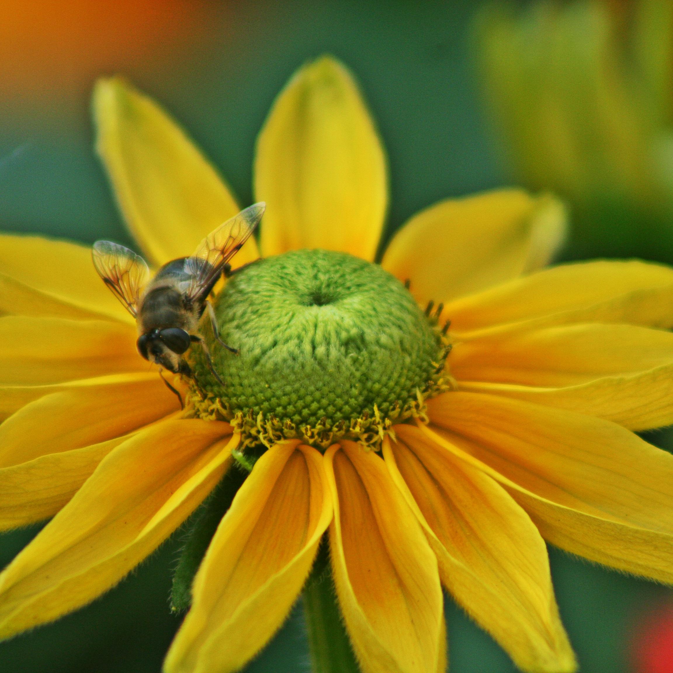 eva bee smaller.jpg