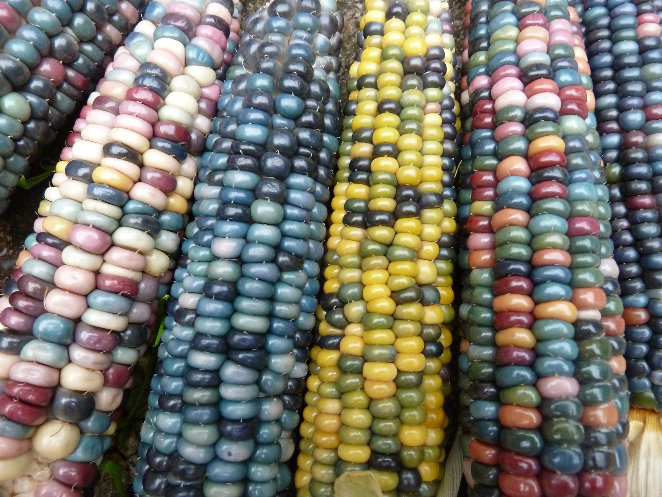 9 - Glass Gem corn.jpg