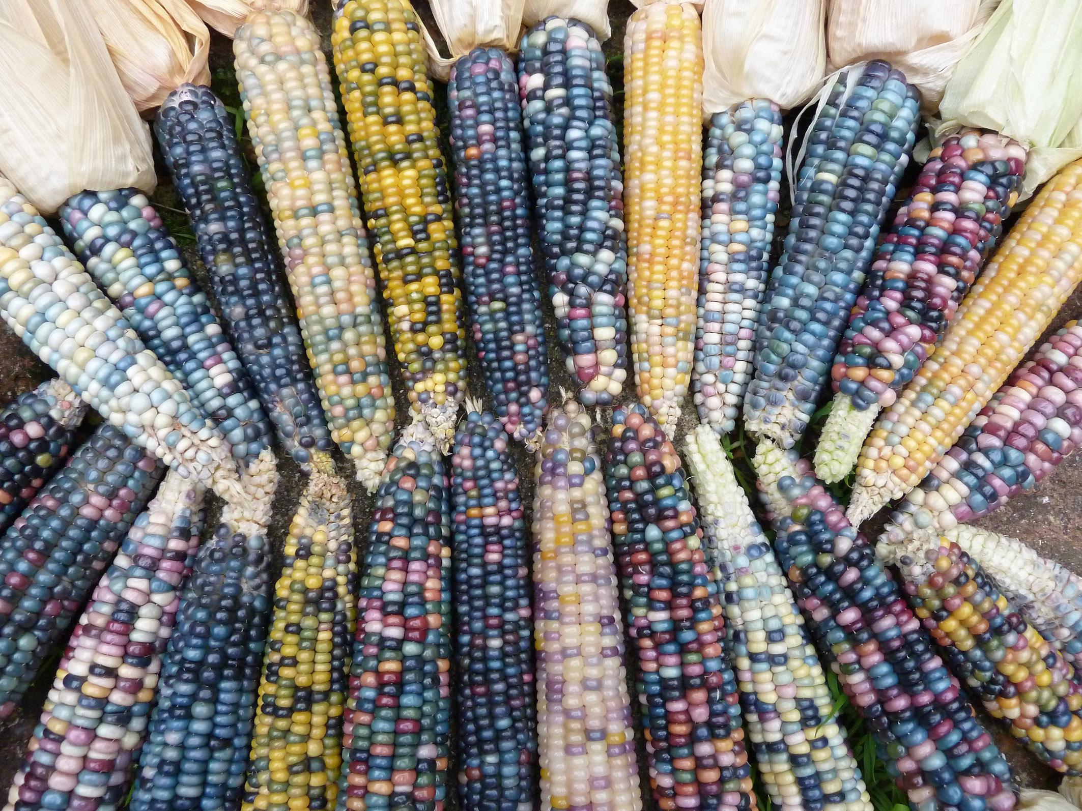 8 - Glass Gem corn.jpg
