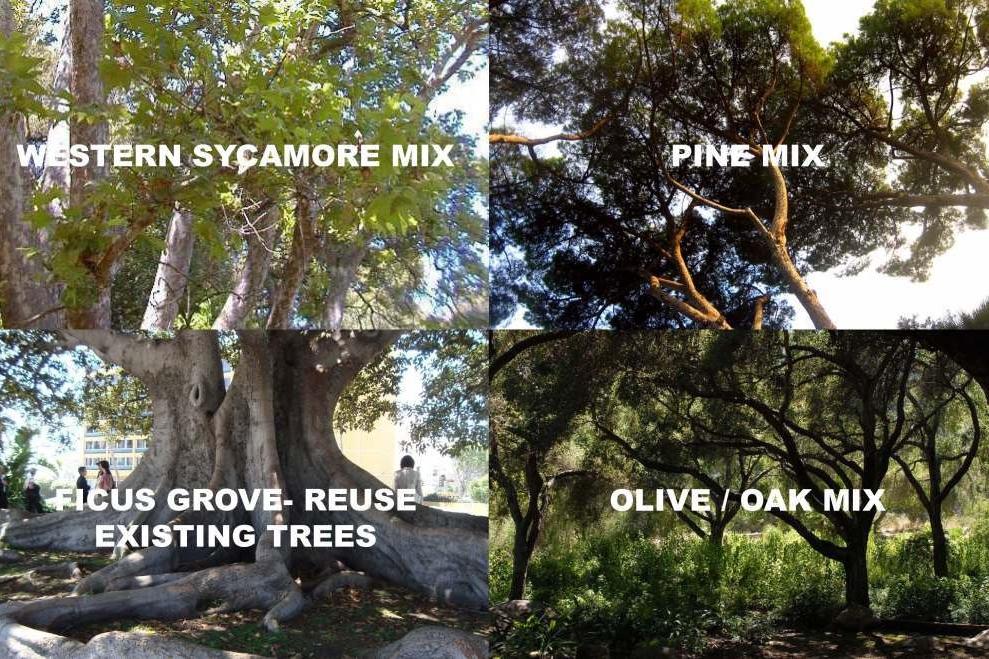 tree groves.jpg