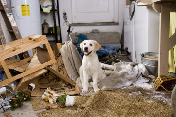 """Marley from the classic canine film """"Marley and Me"""". Just had to throw a cute lab puppy picture in for a smile."""