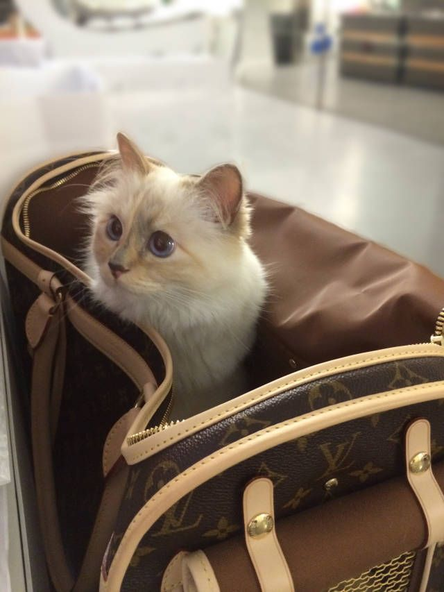 travel cat.jpg