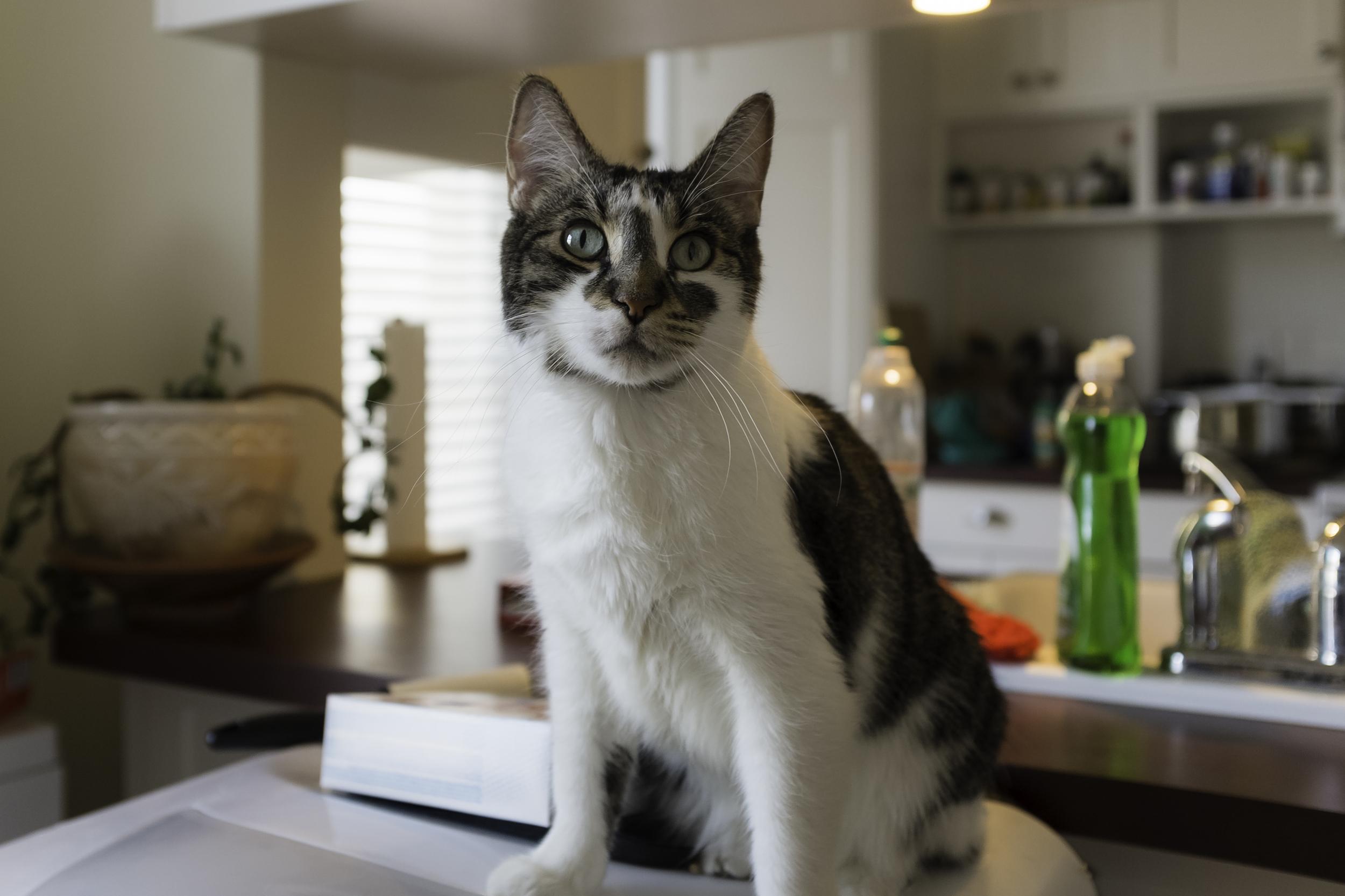 dishwasher cat 2.jpg