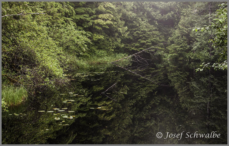 Rainforest Reflection