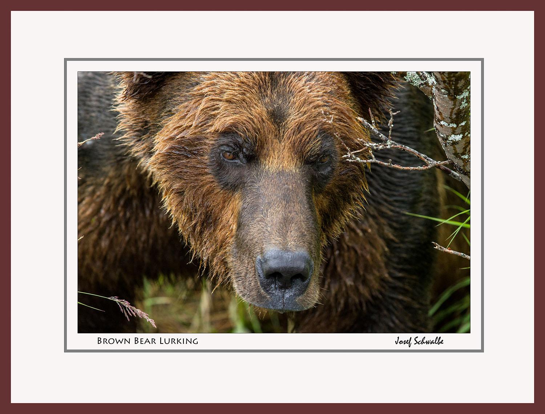 BrownBear08.jpg