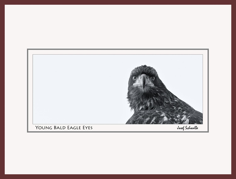 Eagle05.jpg