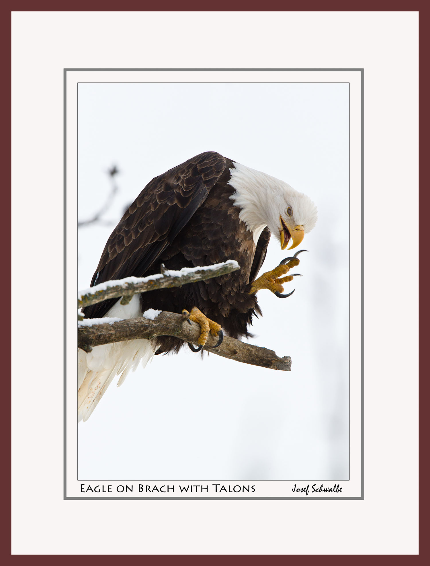 Eagle07.jpg