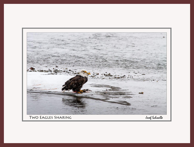 Eagle09.jpg
