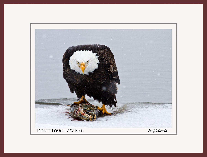Eagle10.jpg