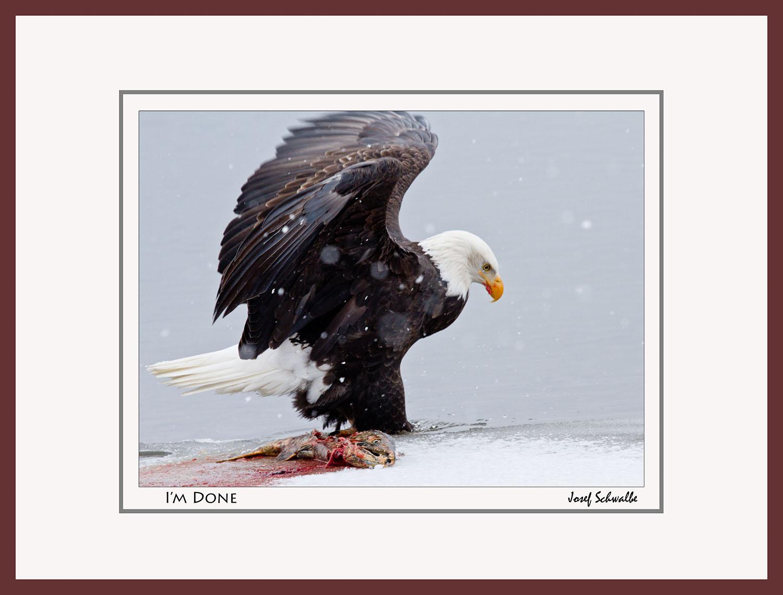 Eagle14.jpg