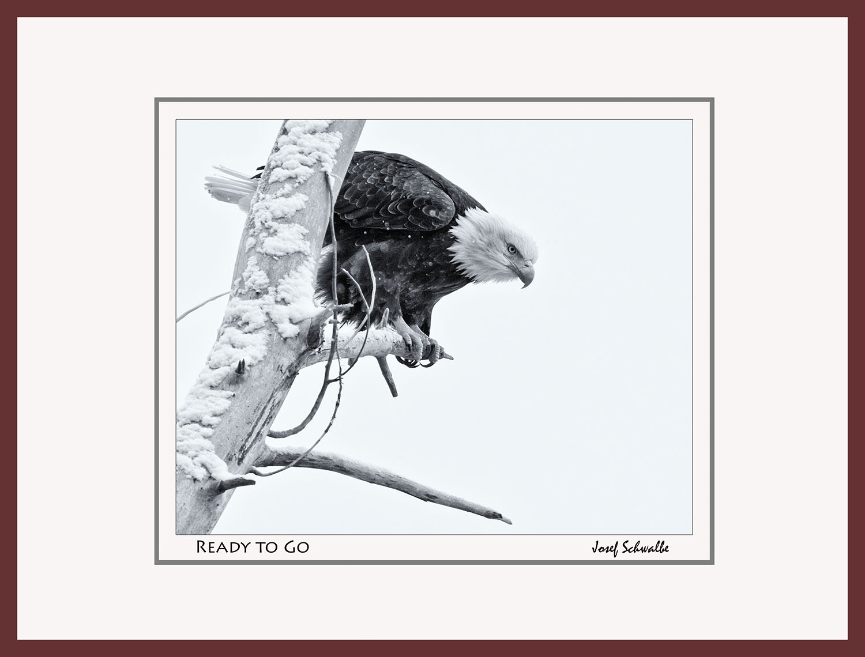 Eagle16.jpg
