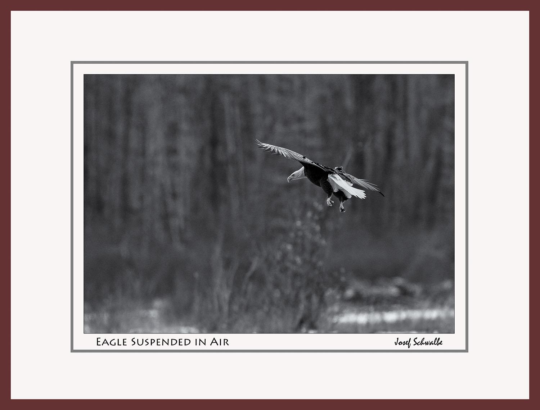Eagle19.jpg