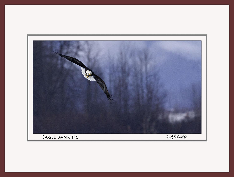 Eagle23.jpg