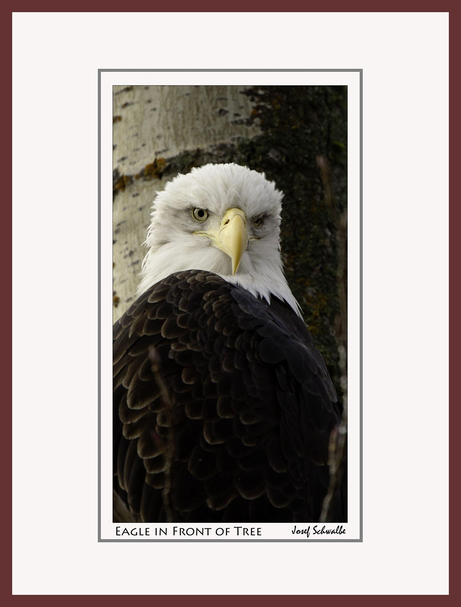 Eagle27.jpg
