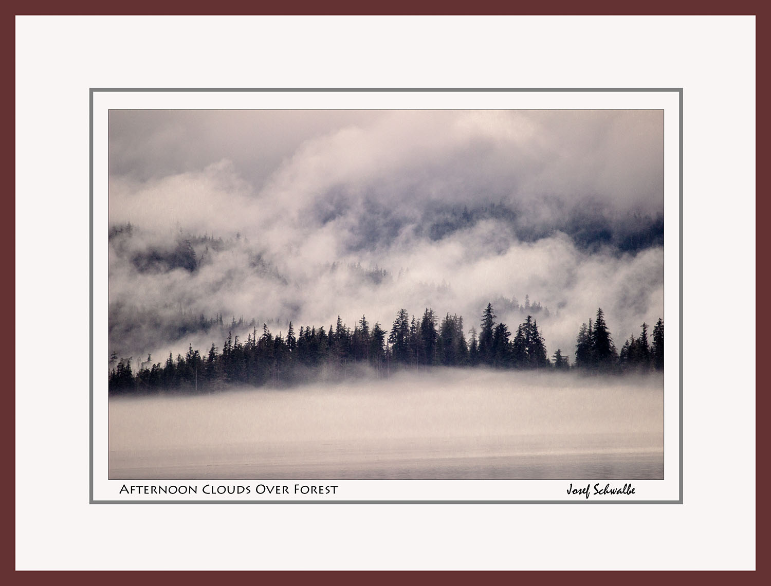 Afternoon Clouds Over Forest